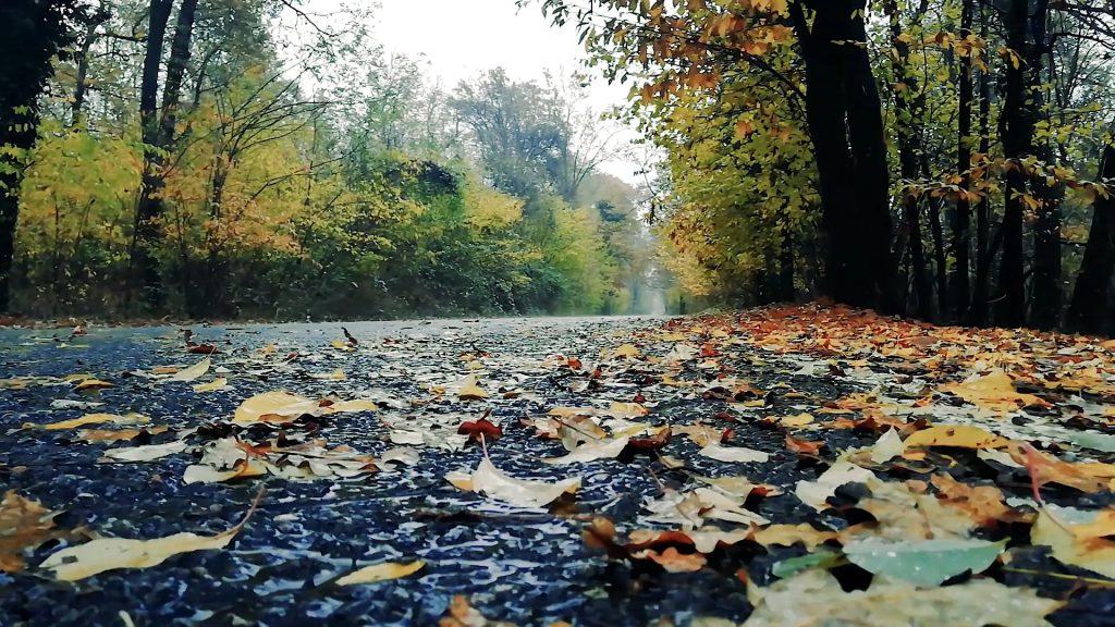 Fall Scenery with Music & Rain Sound