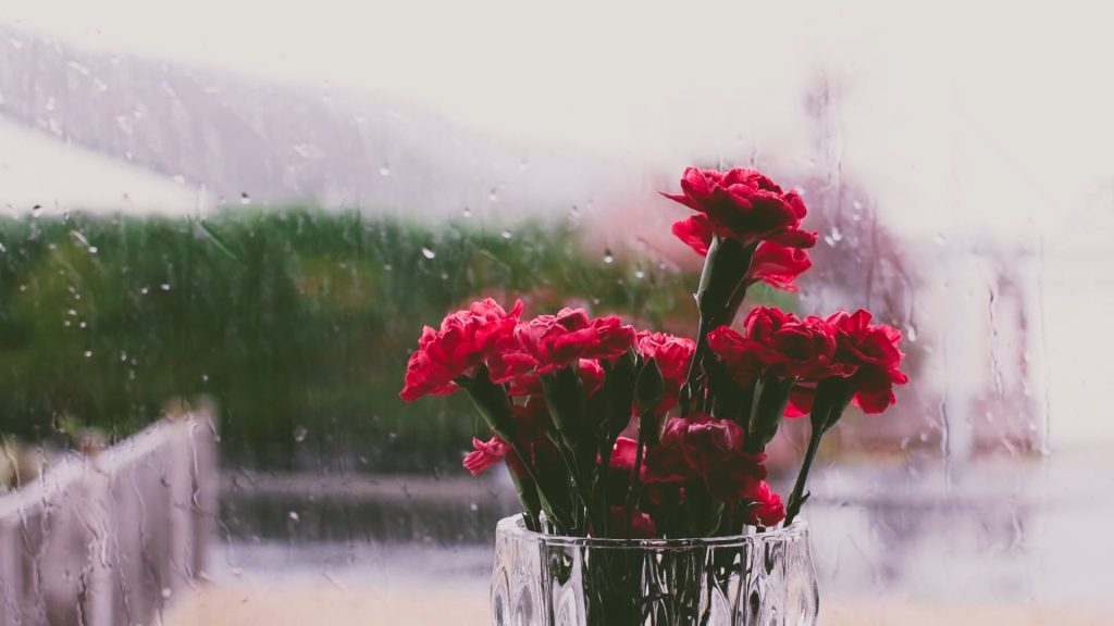 Relaxing Rainfall With Calming Music