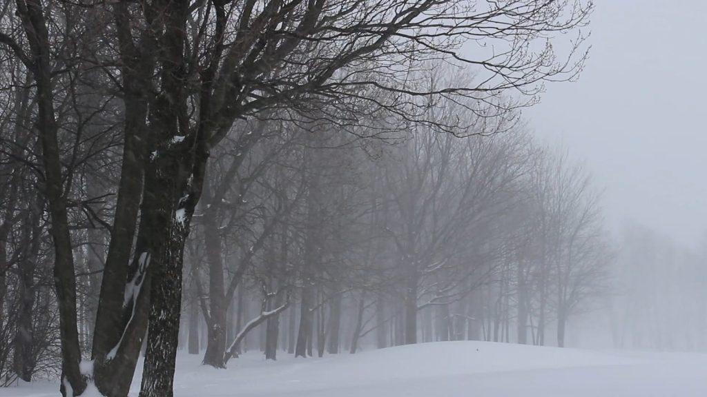 Relaxing Snowfall