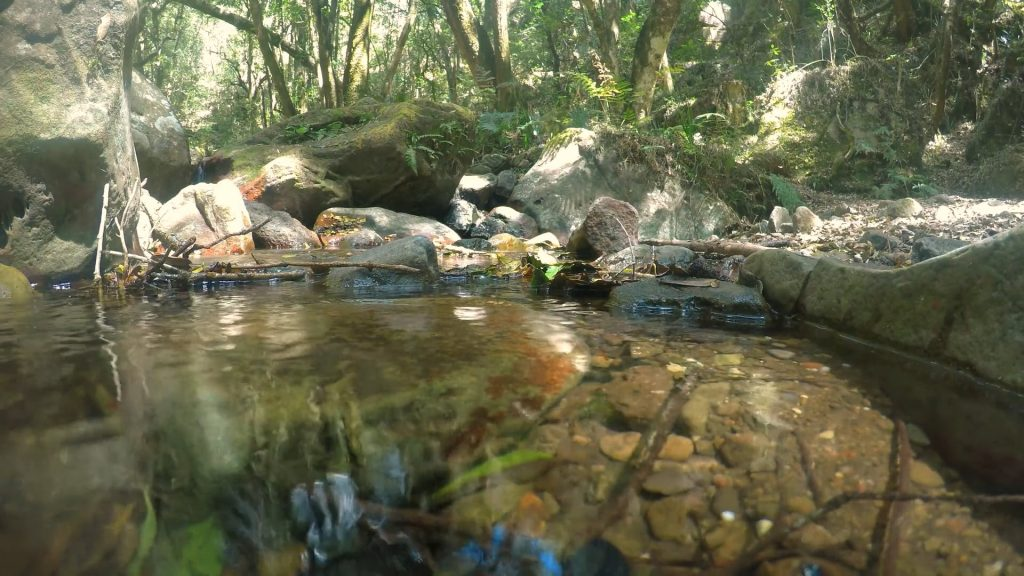 Small Stream with Soothing Sound of Running Water