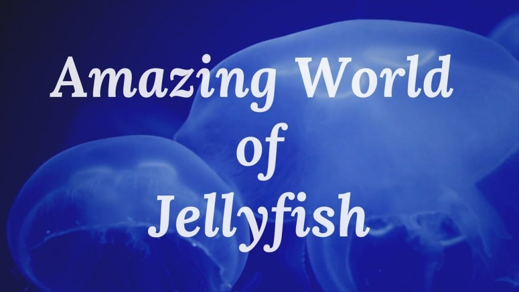 Amazing World of Jellyfish