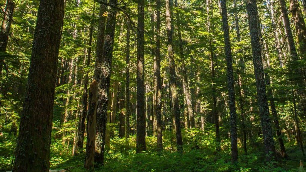 Beautiful Forest, Green Grasslands, Rocky Hills & Calming Music  -Short Version