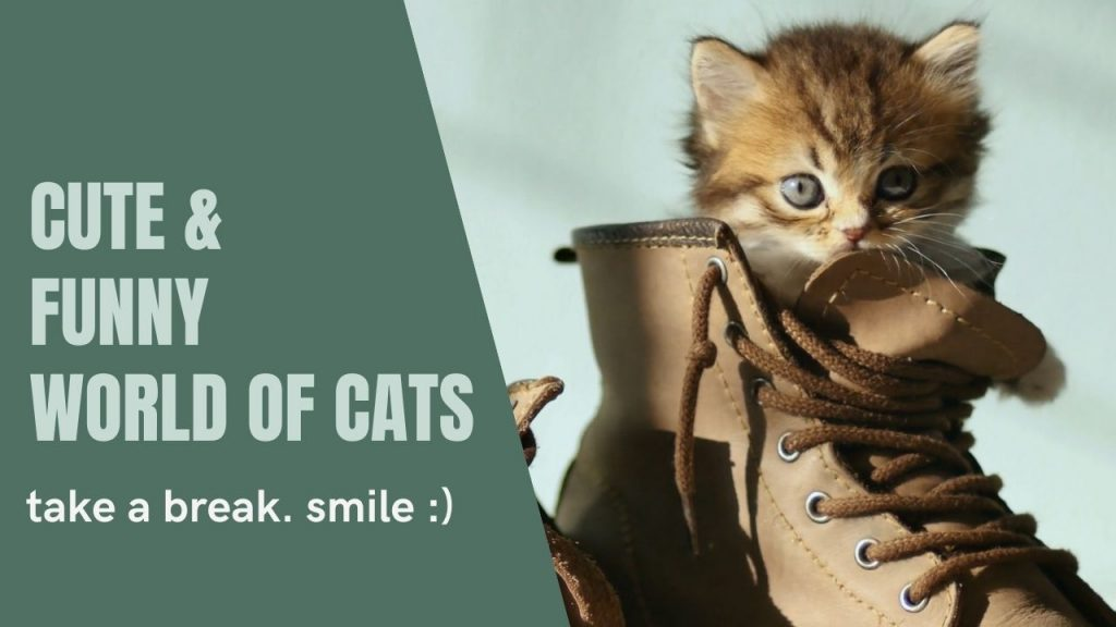 Cute And Funny World Of Cats