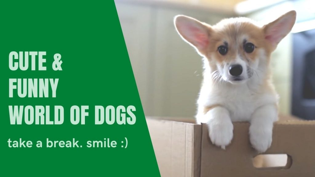 Cute And Funny World Of Dogs