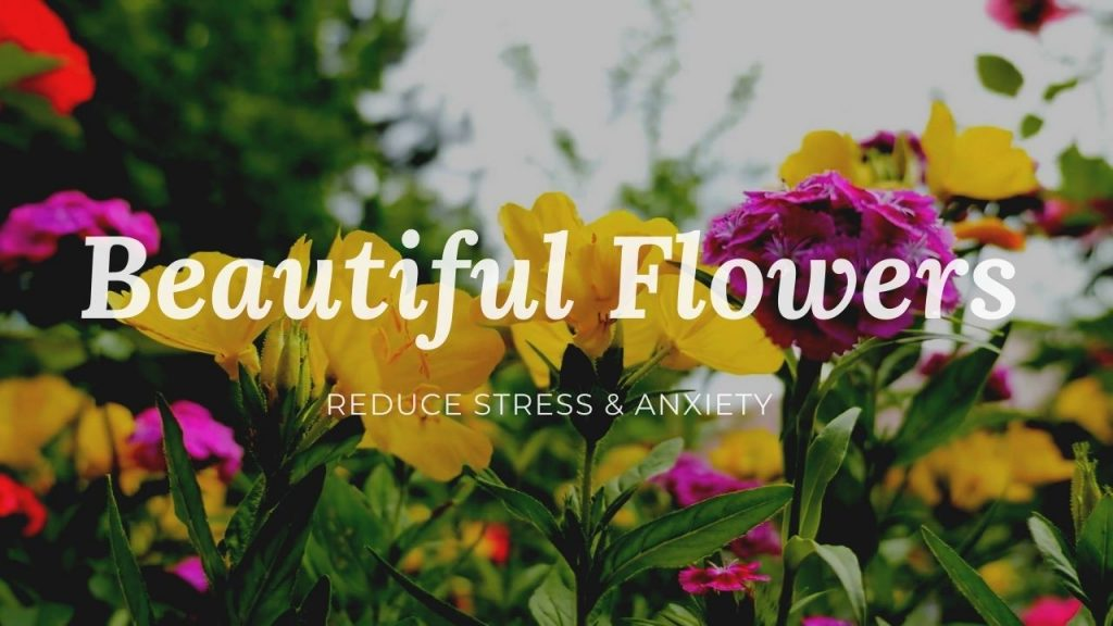 Beautiful Flowers And Music For Relaxation